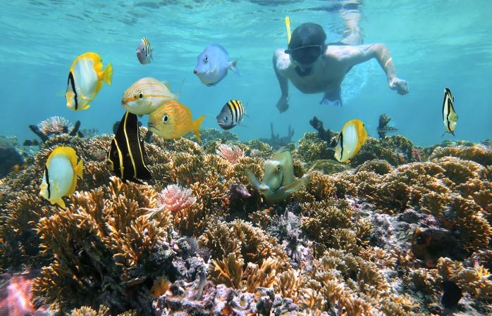Um homem a fazer 'snorkelling' junto do recife de coral das Ilhas de Catalina
