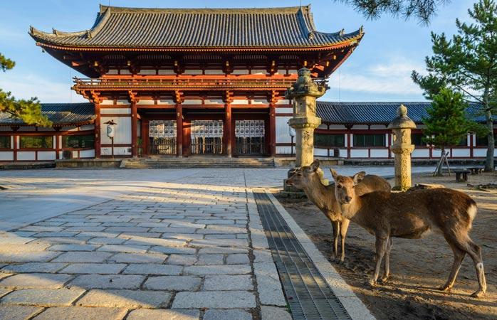Veados selvagens no Parque Nara