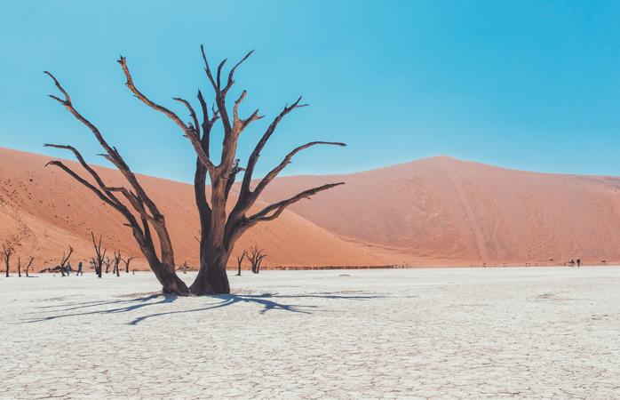 As árvores mortas em Deadvlei têm resistido ao tempo, destinadas a uma existência esquelética neste submundo ressequido