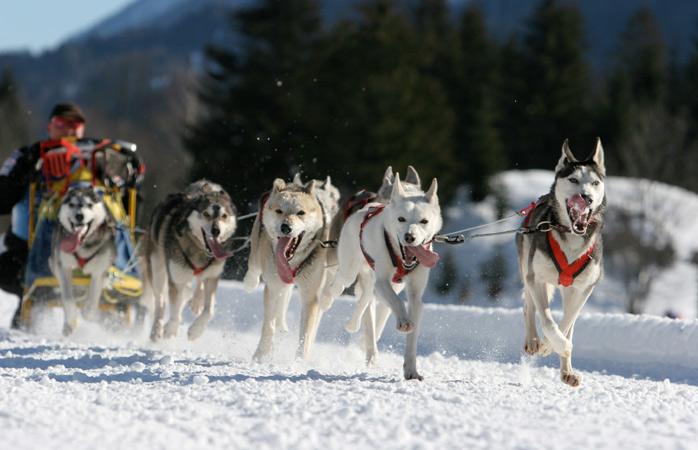 Anda num trenó puxado por cães este inverno no Alasca