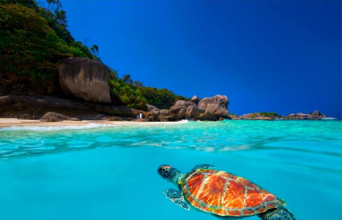 Águas límpidas, animais queridos selvagens e muito sol. Tudo parte destas ilhas na Tailândia.