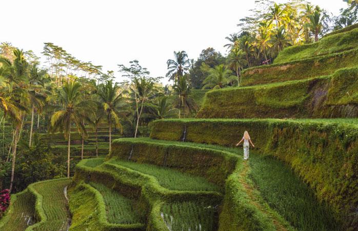 Comer, dormir, fazer ioga, passear pelos arrozais e repetir!