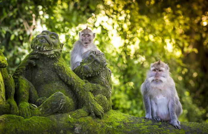 A Sagrada Floresta dos Macacos na Indonésia é um bom exemplo disso.